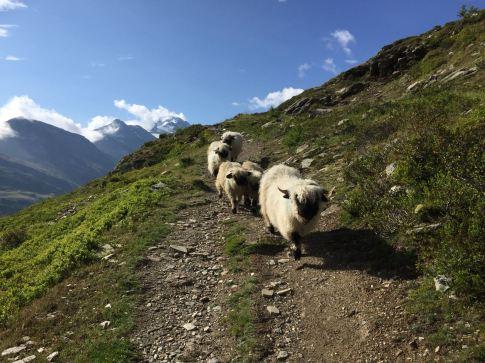 Wanderung von Giw nach Simplon